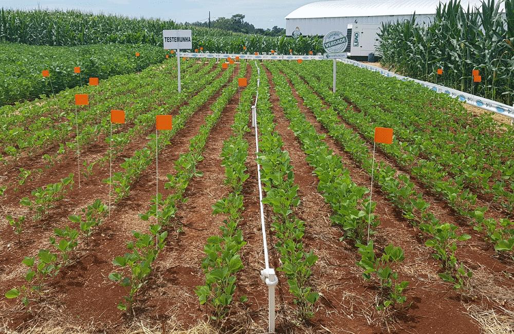 Super Agro - Londrina - PR
